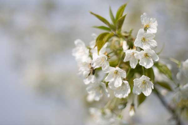 Giardini pagani di fabio pagani il giardiniere a milano for Giardiniere milano